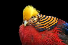 Multi Colored Bird Royalty Free Stock Photo