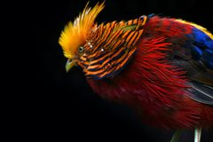 Multi Colored Bird Royalty Free Stock Photos