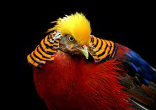Multi Colored Bird Stock Photography