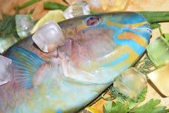Multi-colored blauwe tropische helder van de ruwe vissenpapegaai op houten B Royalty-vrije Stock Fotografie