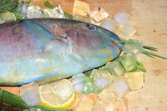 Multi-colored blauwe tropische helder van de ruwe vissenpapegaai op houten B Stock Foto's