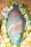 Multi-colored blauwe tropische helder van de ruwe vissenpapegaai op houten B Stock Foto