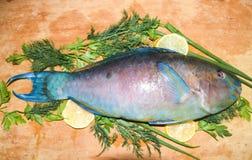 Multi-colored blauwe tropische helder van de ruwe vissenpapegaai op houten B Royalty-vrije Stock Foto's