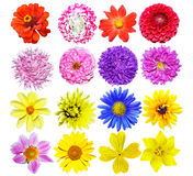Multi-colored bloemen Royalty-vrije Stock Foto's