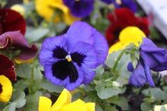 Multi-colored bloemen op een close-up van het stadsbed stock afbeelding