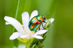 Multi-colored bug Royalty Free Stock Photos