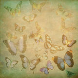 Multi-colored Butterflies Stock Image