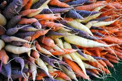 Multi colored carrots Royalty Free Stock Photos