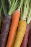 Multi-Colored Carrots Stock Photography