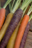 Multi-Colored Carrots Royalty Free Stock Image