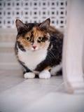 Multi-colored cat Stock Image