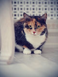 Multi-colored cat Royalty Free Stock Images