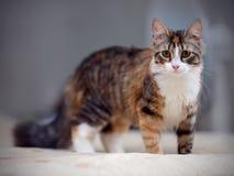 Multi-colored cat Stock Photos