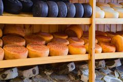 Multi-colored cheeses of different grades on shelves. Italy Royalty Free Stock Images