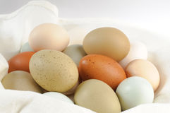 Multi colored chicken eggs Stock Images