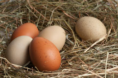 Free Multi Colored Chicken Eggs Stock Photos - 23939683