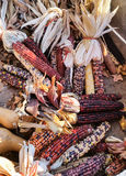 Multi colored corn at farm stand Royalty Free Stock Images