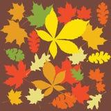 Multi-colored de herfstbladeren Stock Foto's