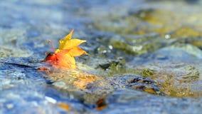 Multi-colored de herfstbladeren die op het water drijven stock footage