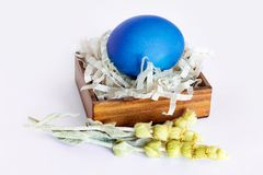 Multi-colored Easter eggs lie on a white background. Blue egg egg lies in a wooden box on a white background. Dry flowers royalty free stock image
