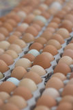 Multi-colored eggs at a farmers market in California. Organic. Organic brown and green eggs in cartons by the dozen at a farmers market in California royalty free stock photography