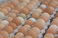 Multi-colored eggs at a farmers market in California. Organic. Organic brown and green eggs in cartons by the dozen at a farmers market in California stock photography