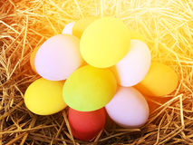 Multi-colored. Eggs on the nest with orange light side for easter holiday background Stock Image