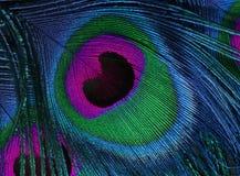 Multi-colored en briljante veer van de staart van de pauw Stock Foto's