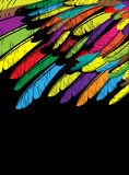Multi-colored feathers A Stock Photo
