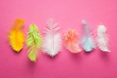 Multi-colored feathers of a bird of paradise on a pink background royalty free stock photos