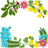 Multi colored florets Royalty Free Stock Photography