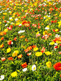 Multi colored flower bed Royalty Free Stock Images
