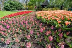 Multi-colored flower beds at Keukenhof Gardens Stock Photo