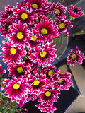 Multi-colored Flowers Stock Photos