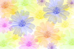 Multi-colored flowers Royalty Free Stock Photo