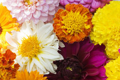 Multi colored flowers background Royalty Free Stock Image