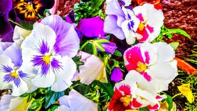 Multi colored flowers stock photography