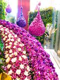 Multi-colored flowers In Orchid in Bangkok Royalty Free Stock Photos