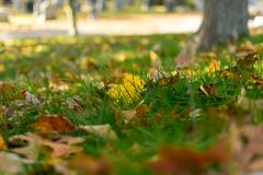 Multi-colored foliage and green grass on a sunny autumn day in Upstate New York royalty free stock photography