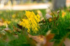 Multi-colored foliage and green grass on a sunny autumn day in Upstate New York royalty free stock photo