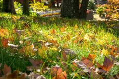 Multi-colored foliage and green grass on a sunny autumn day in Upstate New York stock photos