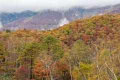 Multi-colored forest trees during autumn season around Mt. Shiga area. Royalty Free Stock Photos