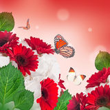 Multi-colored gerbera Royalty Free Stock Images