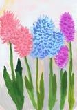 Multi-colored hyacinten De gouache van de kinderen` s tekening, waterverf Royalty-vrije Stock Fotografie