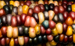 Multi Colored Indian Corn Maize. Close Up Royalty Free Stock Photos