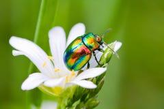 Multi-colored insect Royalty-vrije Stock Foto's