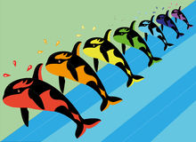 Multi-colored killer whales. Stock Photography