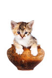 Multi-colored kitten in a clay pot. On a white background Stock Images