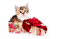 Multi-colored kitten in a gift box. On a white background Royalty Free Stock Photography