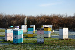 Multi-Colored Langstroth Bee Hives Stock Photos